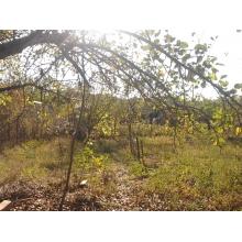 Два земельных участка по 6 соток в ДНТ Садовод (старый пост ГАИ)